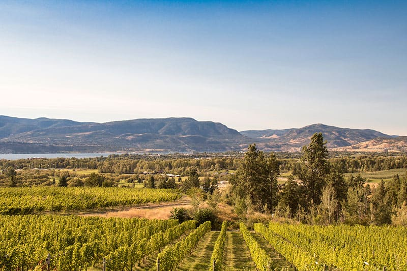 Kelowna Winery tantalus vineyards evening shot can see mountains and okanagan lake in the distance